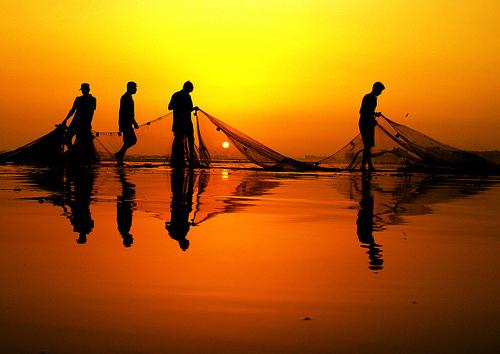 ribari